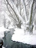 Wisconsin Weeping Willow, snowy landscape