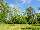 Redbud, Tree Caramel, landscape