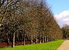Horse Chestnut, landscape