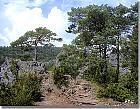 Swiss Mountain Pine, Mugo Pine, landscape