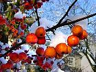 Japanese Flowering Crabapple, snowy landscape