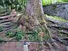 Bur Oak, trunk
