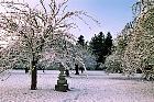 Cherry, snowy landscape