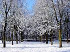Horse Chestnut, snowy landscape