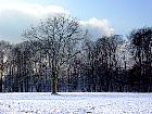 Black Walnut, snowy landscape