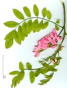 dans Mon repertoire des plantes les moins usitees